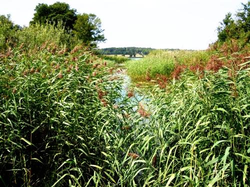 Vattenvägen in i Edssjön kr