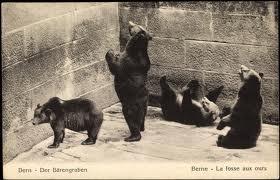 björnar i Bern
