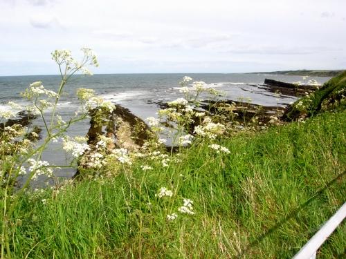 2007 St Andrews c kr