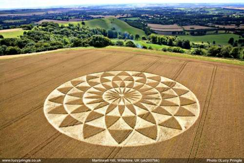 Lucy Pringles Crop Circle