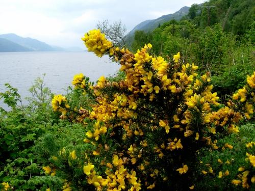 2007 Loch Ness d kr
