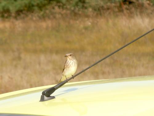 Flyttfågel b kr