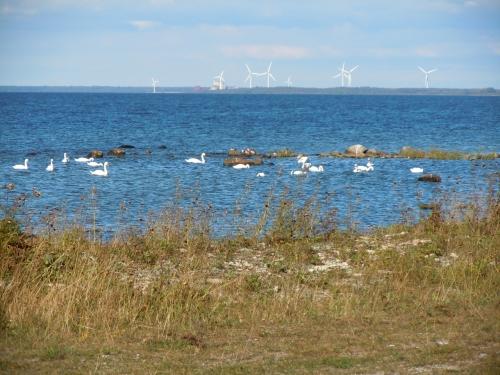 Klintehamn från Ekstakusten kr