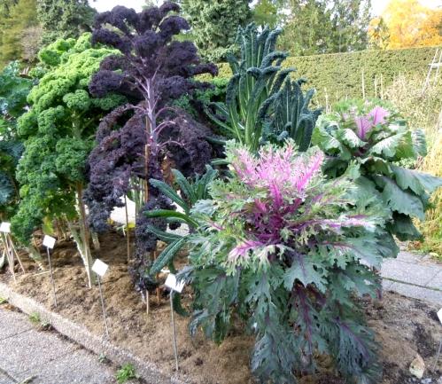 Köksväxter kål c
