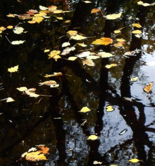 L kröv i Japanska dammen