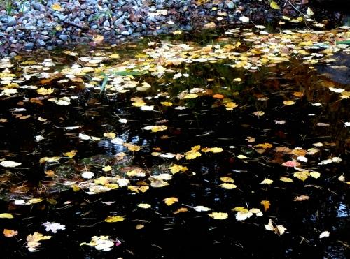 Löv i Japanska dammen b kr