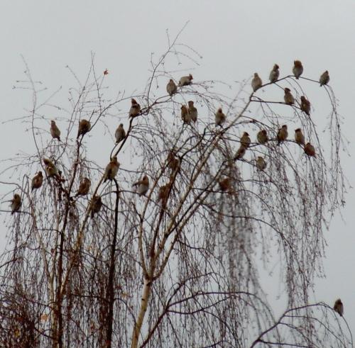 Fågelliv d kr