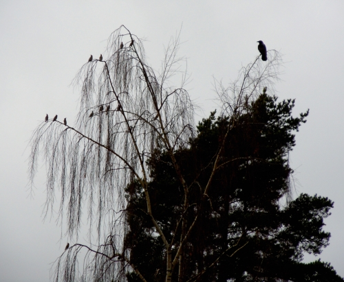 Fågelliv e kr
