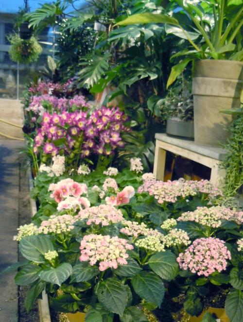 Blommande krukväxter kr
