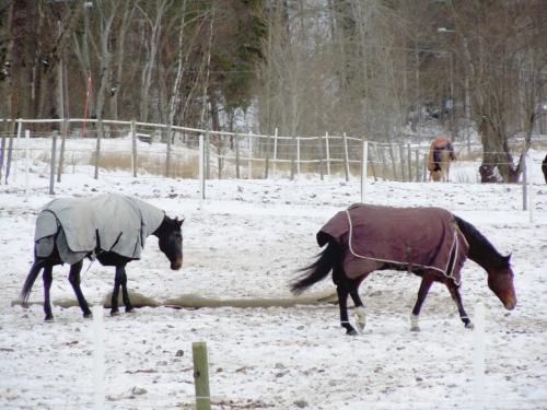 Hästar mår bra av att vara ute x antal timmar om dagen kr