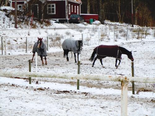 Hästar ute kr