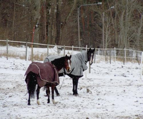 Hästar utevistelse kr