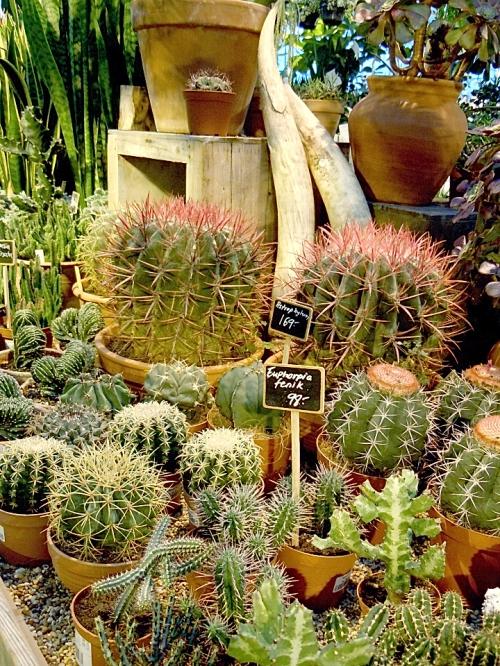 Kaktusbänken kr