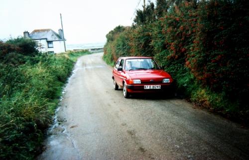 Irland Fuchsiahäck b kr