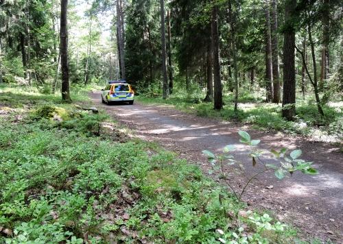 Oväntat möte i blåbärsskogen kr