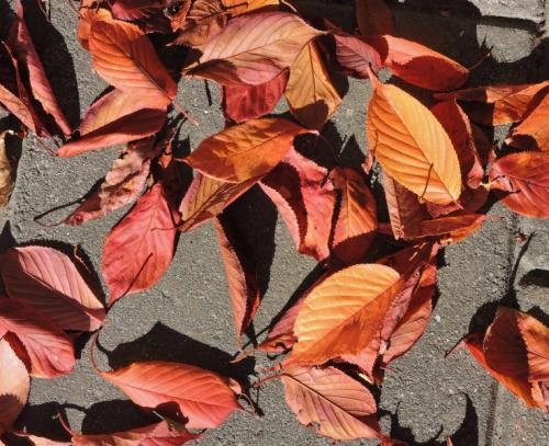 Eldiga löv kr