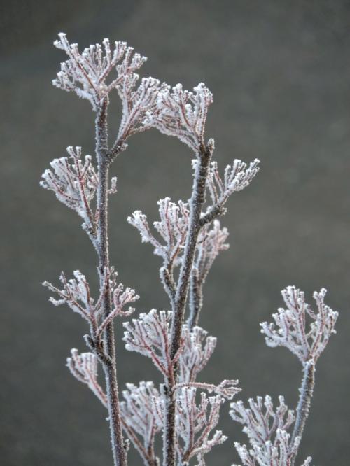 Frost kr