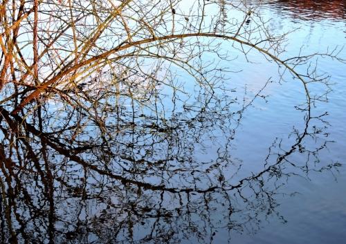 Nypongrenar d vid ån kr jpg