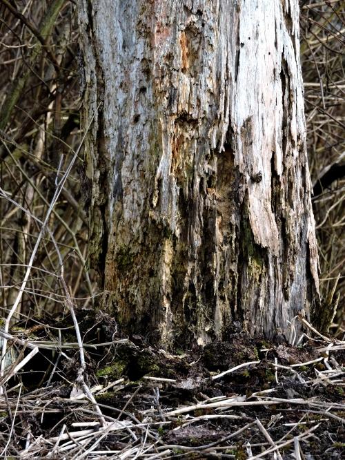 Träd för insekter