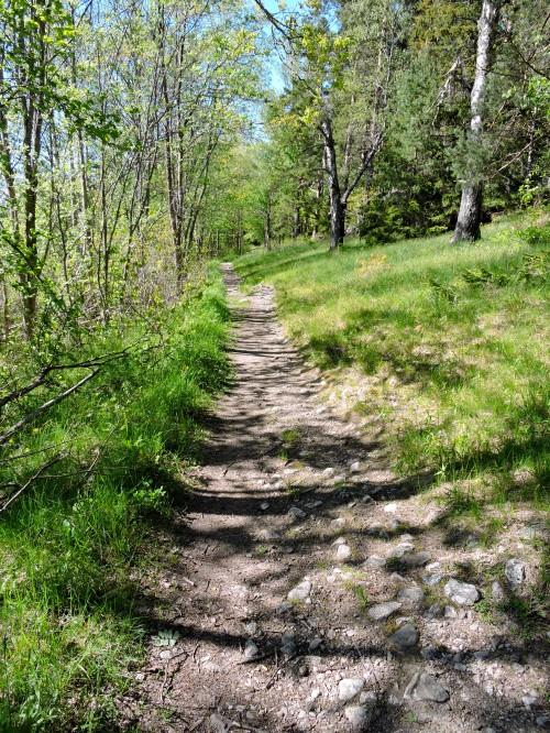 Utmed skogsranden