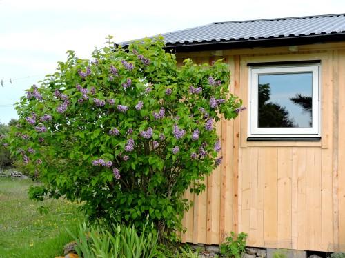 Gotland nytt fönster