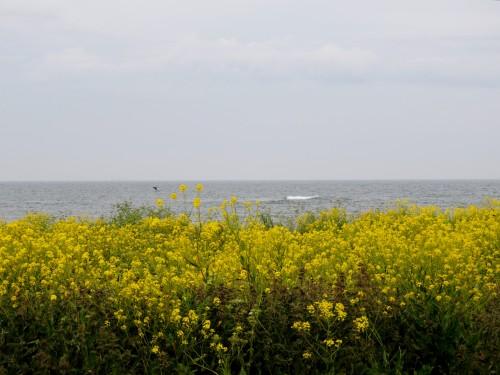Gotland ryssgubbar på Faludden