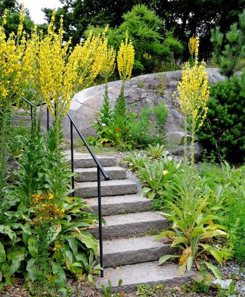Bergianska Kungsljus lyser upp trappan