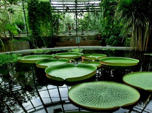 Uppsala tropiska växthuset