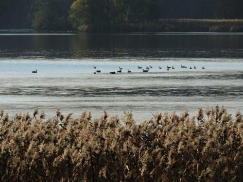 Fåglar i hela sjön