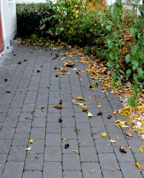 Någon sorts skräp ligger på marken förutom löv förstås