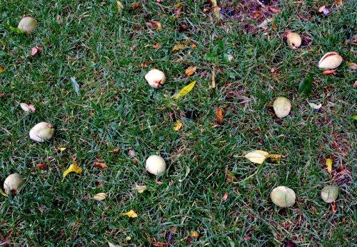 Under mandelträdet