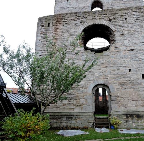 Mandelträdet vid S:t Clemens ruin
