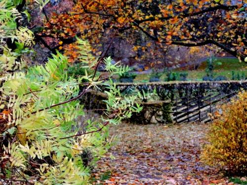 DBV:s trädgård, löv som ännu sitter kvar