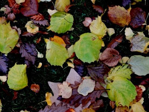 Blandade löv