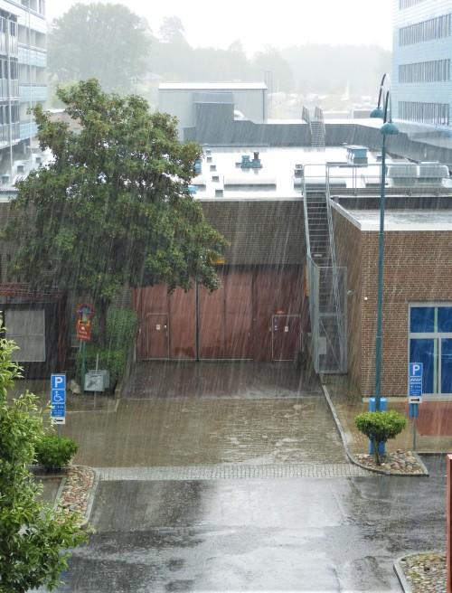 Efterlängtat regn